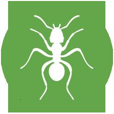Biologia – Formigas