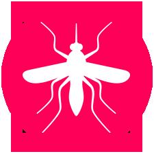 Biologia – Mosquitos